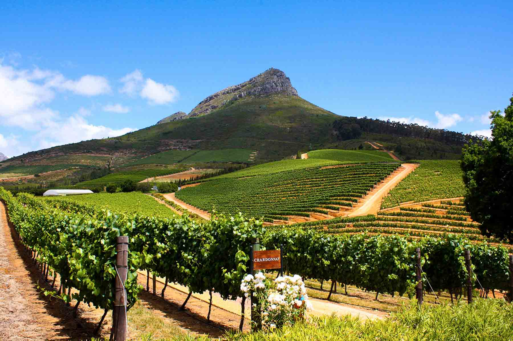 Cape Town Winelands South Africa