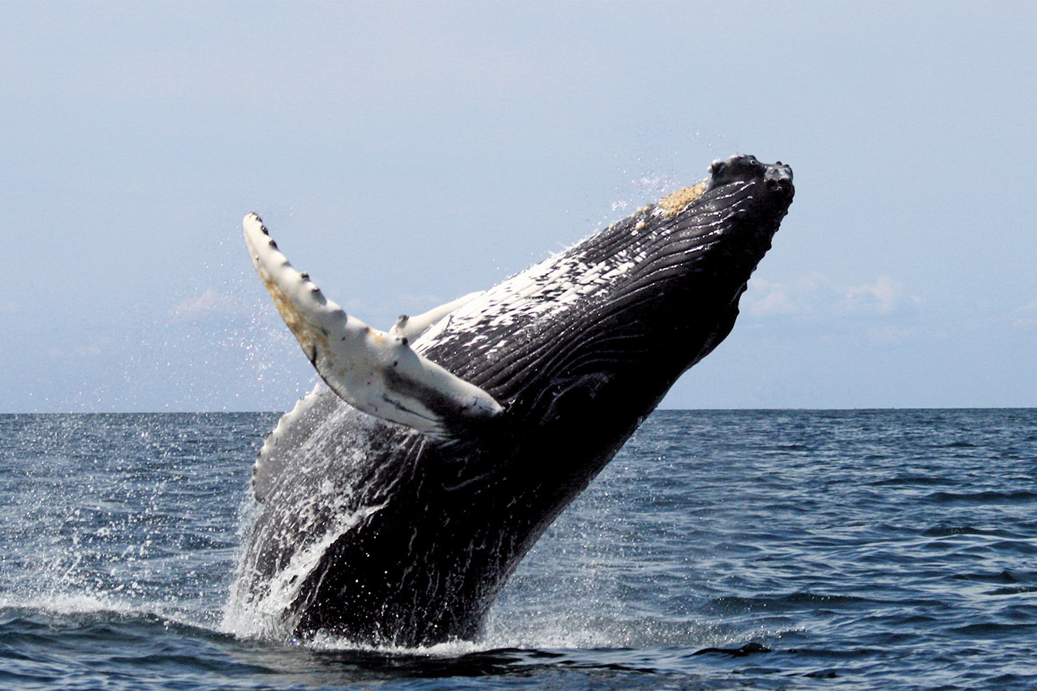 Whale Watching Garden Route Tour