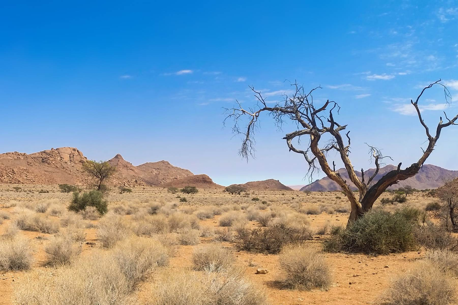 Best of Namibia Tour