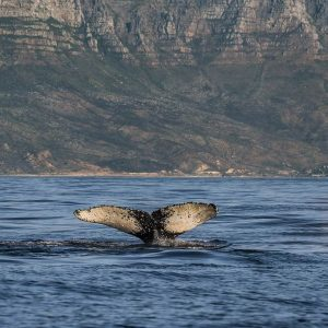Whale Watching Cape Town Tour